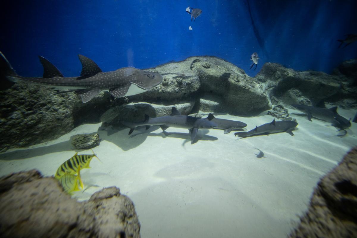 «Зубастые выходные»: в «Москвариуме» на ВДНХ покажут новорожденного акуленка