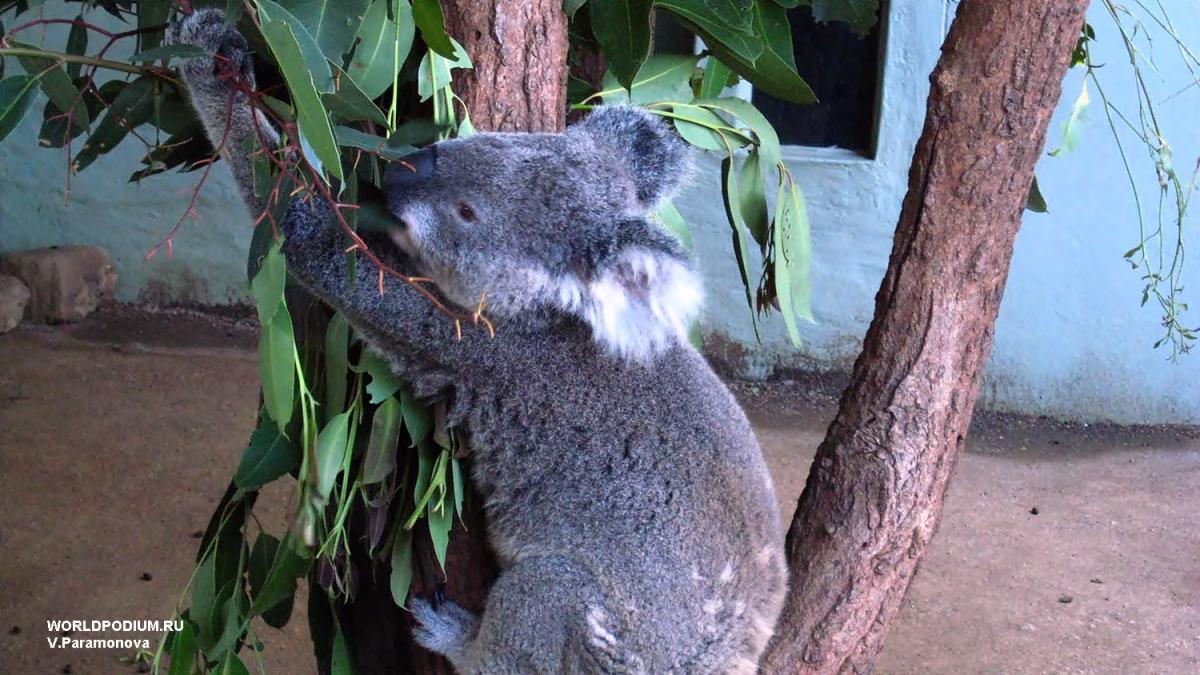 Австралия: чем дальше и таинственнее, тем интереснее!