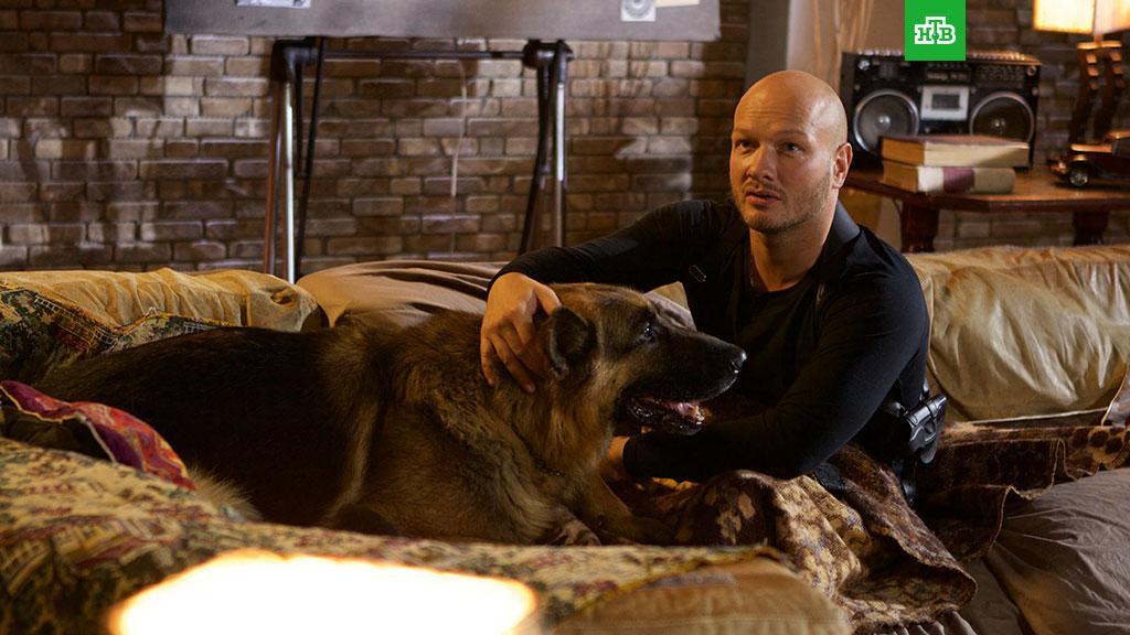 Телеканал НТВ приступил к съёмкам пятого сезона детектива «Пёс»