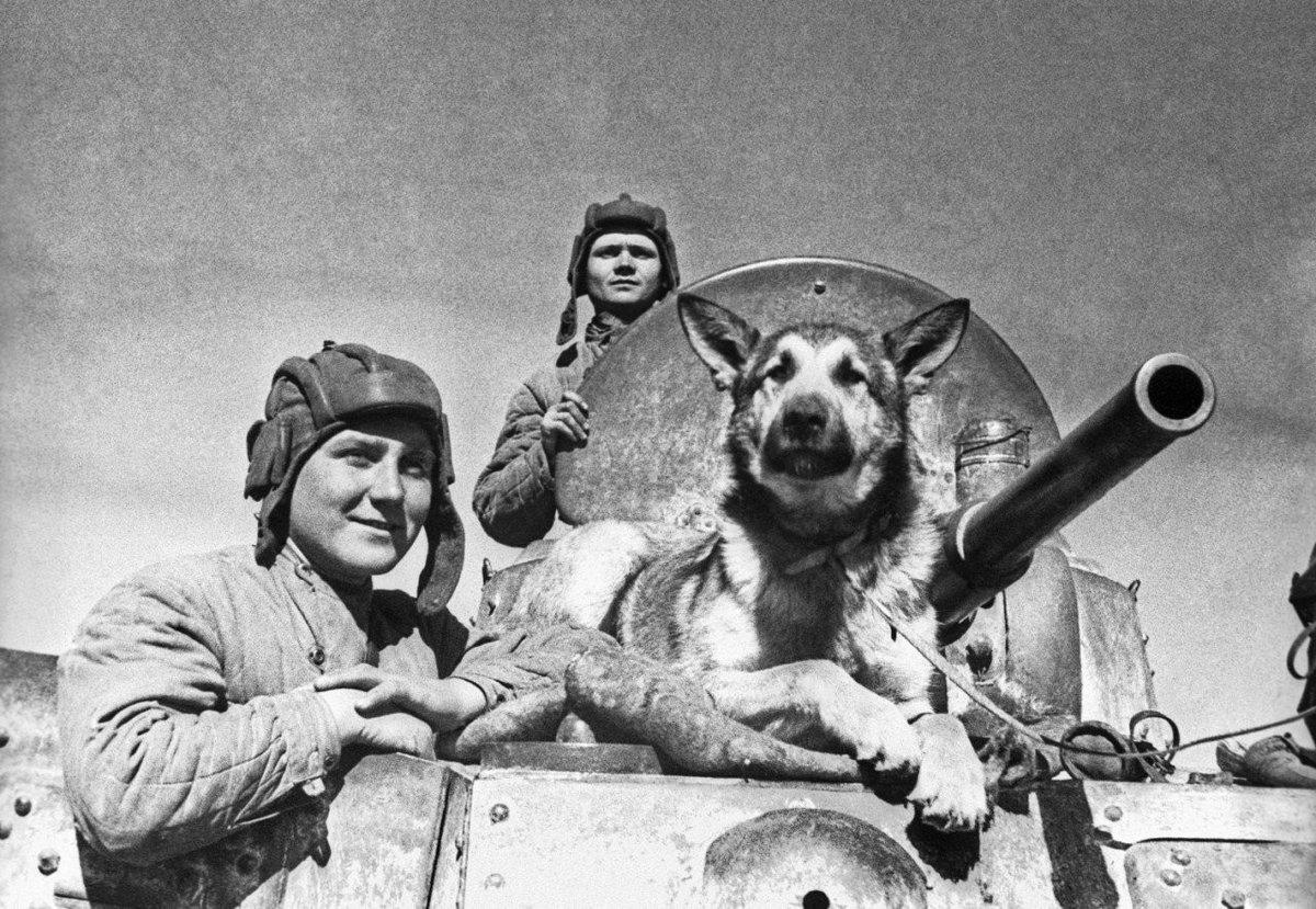 Овчарка Джульбарс - собака-герой войны, награждённая медалью «За боевые заслуги»