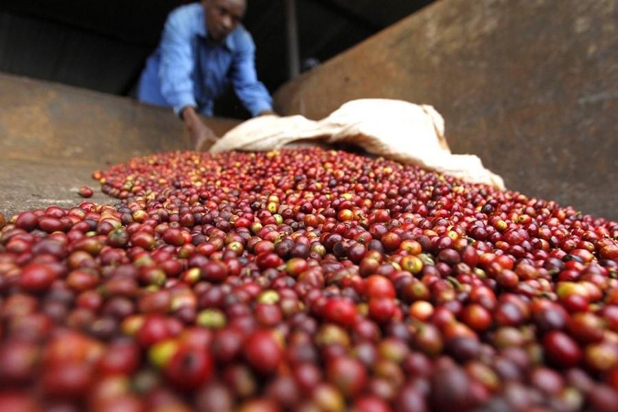 Производители из Уганды впервые представят свою продукцию сразу на трех площадках Москвы